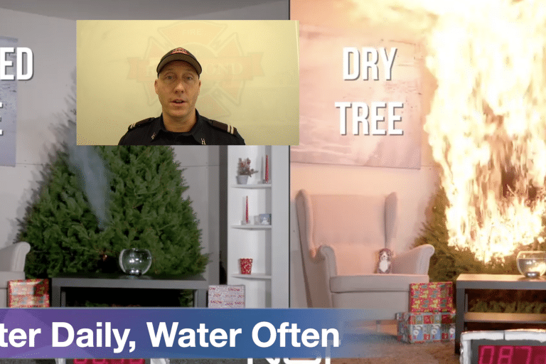 Vlog #10 – Always Water your Christmas Tree
